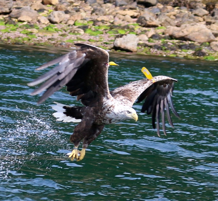 Luckily we had the camera out at just the right moment to capture an eagle fetching his dinner!