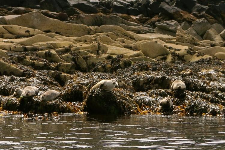 I love seals!